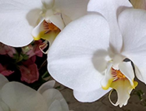 Weddings Bloom at Jewel Box of Morgan Hill