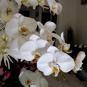 orchids_wedding_florist_custom_jewelry_morganhill